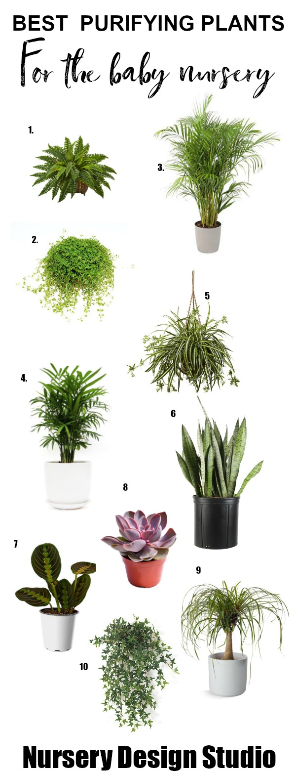 house plants for the baby nursery